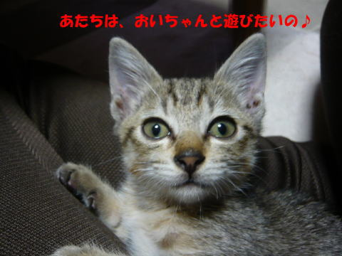 totto_3_a.jpg