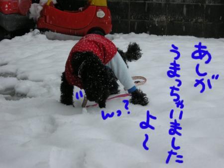 初めての雪