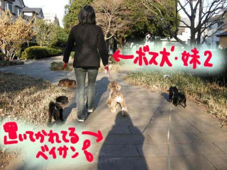 遊歩道はグダグダな歩き方