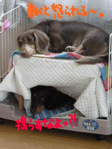 緊張の二段ベッド