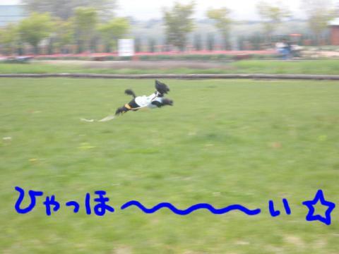 元祖・飛ぶ犬