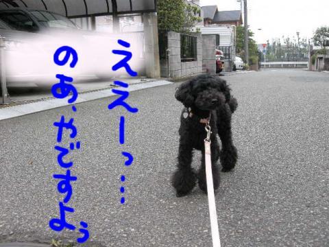 マイペース犬