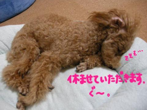 いい夢見ろよ~♪