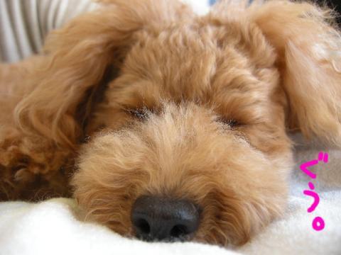 マジ寝する犬