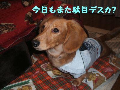 2006_1230(010).jpg