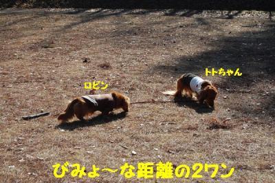 トトちゃんとお散歩