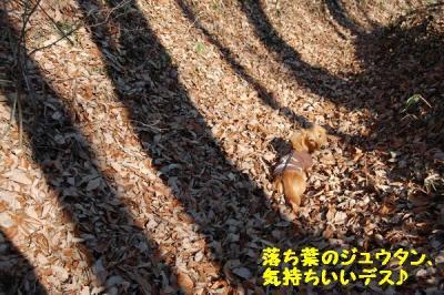 トトちゃんとお散歩5