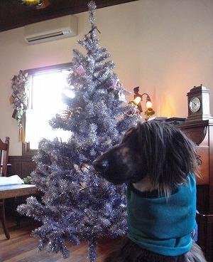 クリスマス♪♪♪
