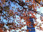 秋とマンション
