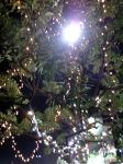 ライトUP木