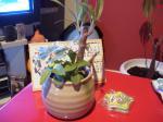 小さい鉢にヵヮィィ命3つ