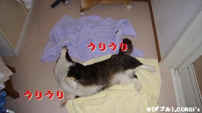 2008050305.jpg