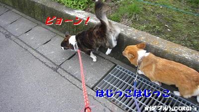 2008060402.jpg