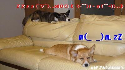 2008062009.jpg