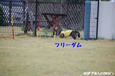 2008082910.jpg