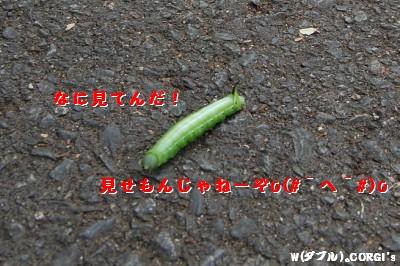2008110307.jpg