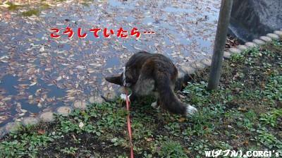 2008110511.jpg