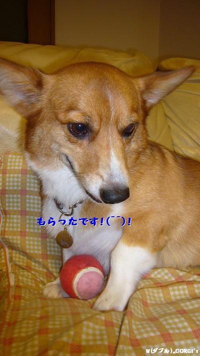 2008110707.jpg