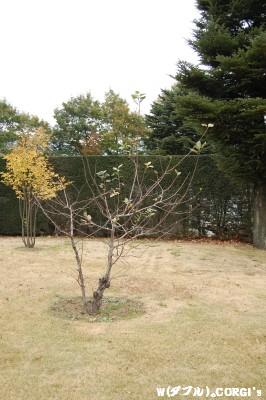 2008110914.jpg