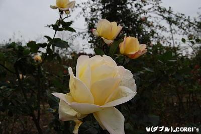 2008111026.jpg