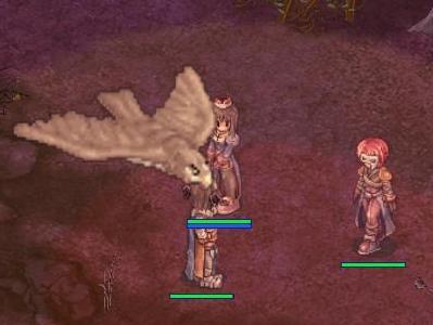 鷹がとんでる・・・