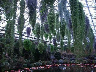富士国際花園