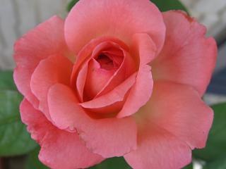 ピンク・パンサー