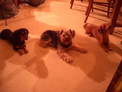 左から、ユリちゃん、バブーくん、ルビー