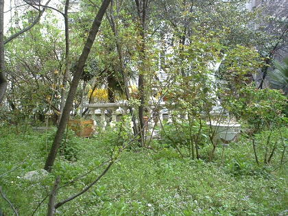 春先の中庭