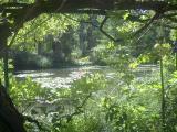 日本庭園。木陰から。