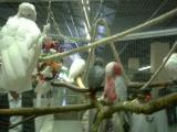 左の小鳥ちゃんに睨まれているような・・・