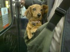 metroにて