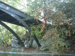 中島が二つあるのですが、その中島同士をわたす橋。