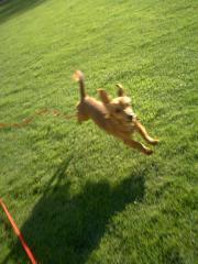 この飛び跳ねようですから。