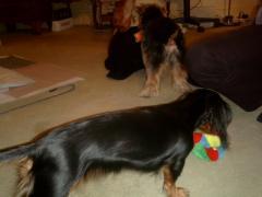 みなさん、おもちゃで遊んでます。。ルビー、、、おまえも遊べば。。
