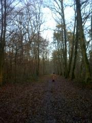 フォンテーヌブローの森