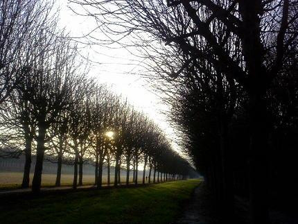フォンテーヌブローの森 お散歩