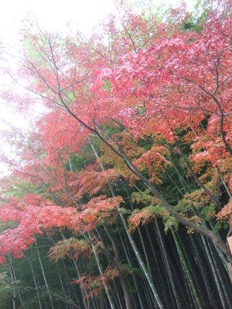 2009.11大阪・京都 075