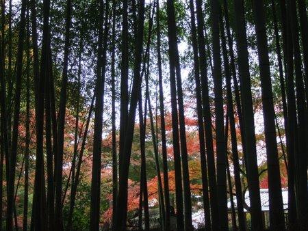 2009.11大阪・京都 104