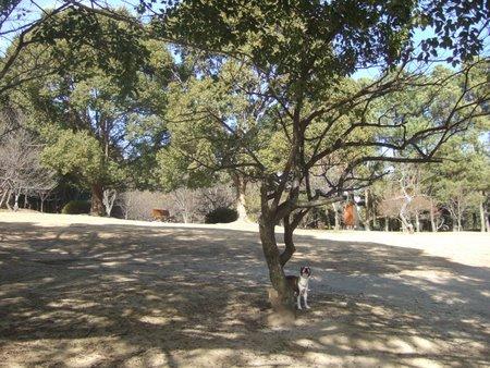日岡山公園 041