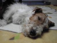 眠いのー!