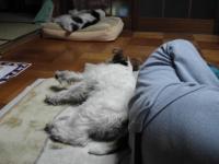 みんなでうたた寝
