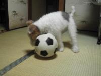 サッカー中7