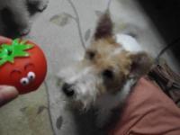 トマトだよ~