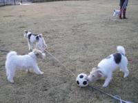 サッカーしますか?