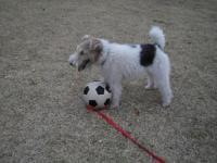 ボール好きだね