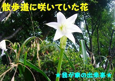 この花なんて花?