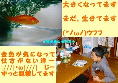 気になる金魚