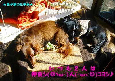 仲良シ(◎ゝω・)人(・ω<◎)コヨシ♪