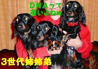 DNA ブラック版